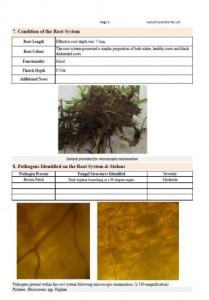 Disease Report
